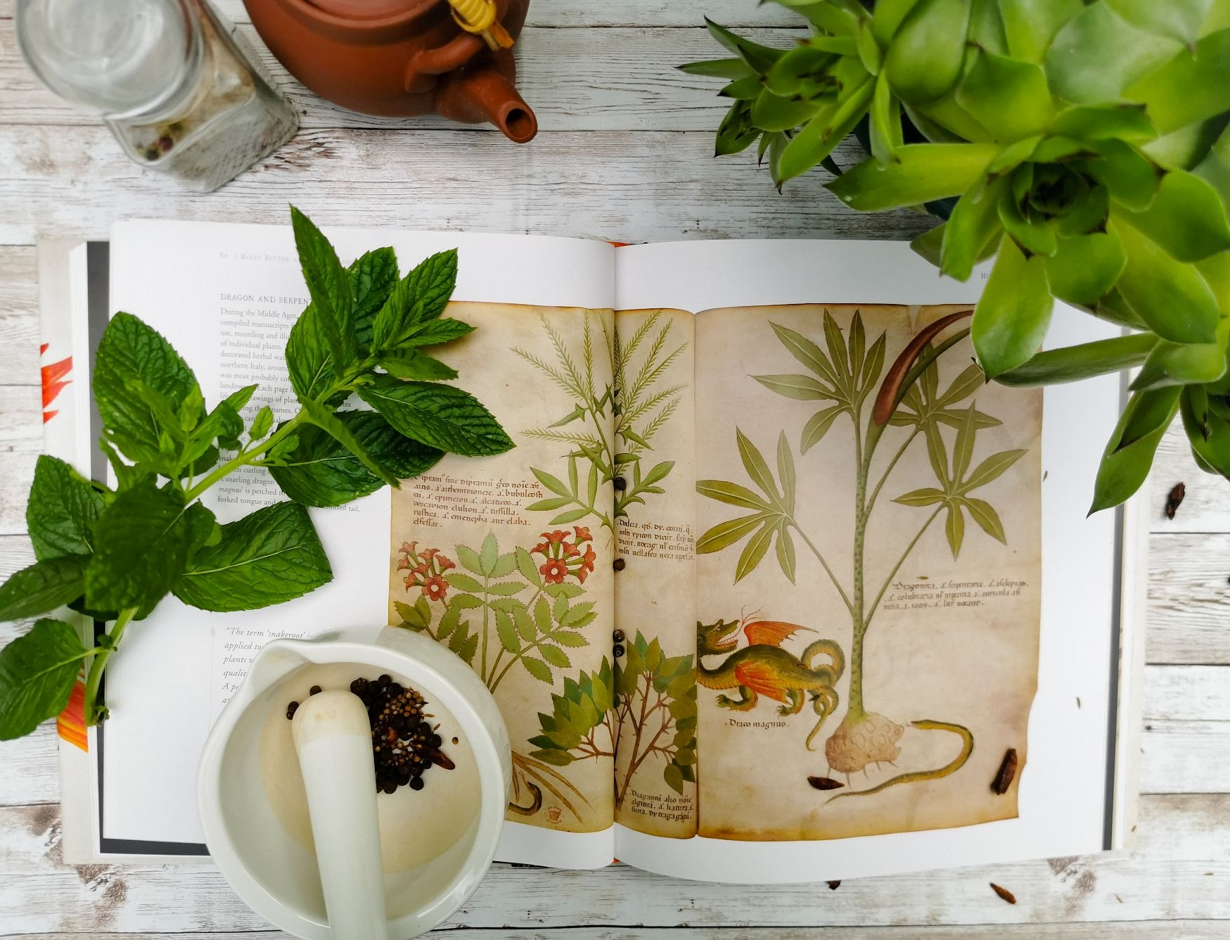 History of magic book with herbology elements